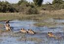 Partir à la découverte du Botswana en Afrique