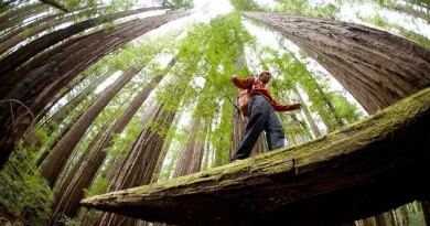 Découverte des arbres géants du Redwood National Park