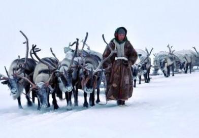 A la découverte d'une transhumance au milieu des rennes en Suède