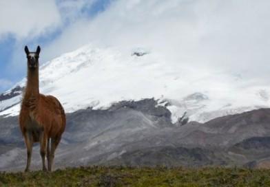 Voyage en Equateur, allée des volcans