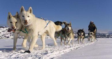 Yukon: sur les traces du «dernier trappeur»