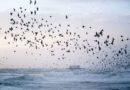 Découverte des plus beaux phénomènes naturels de la planète