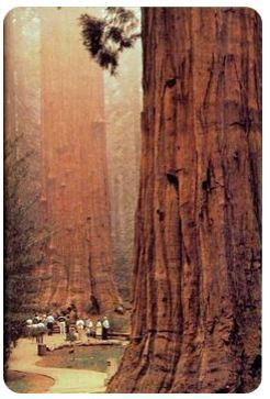 séquoias californie
