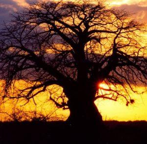 coucher soleil kenya