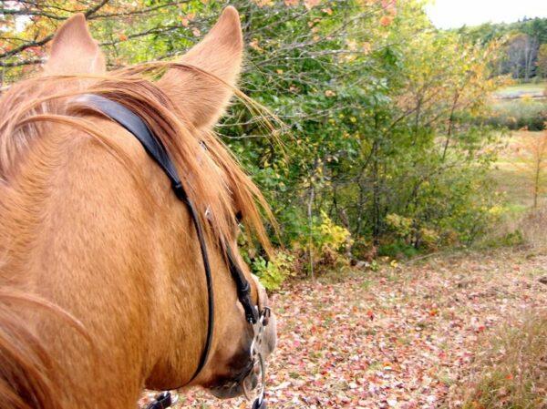 cours équitation perpignan