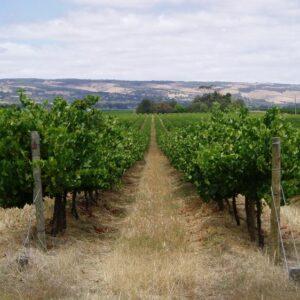 découverte vignobles collioure