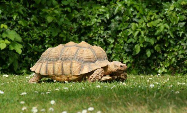 parc animalier vallée des tortues