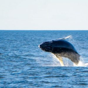 observation baleines méditerranée