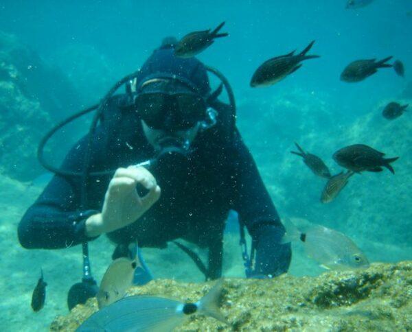 plongée sous-marine perpignan
